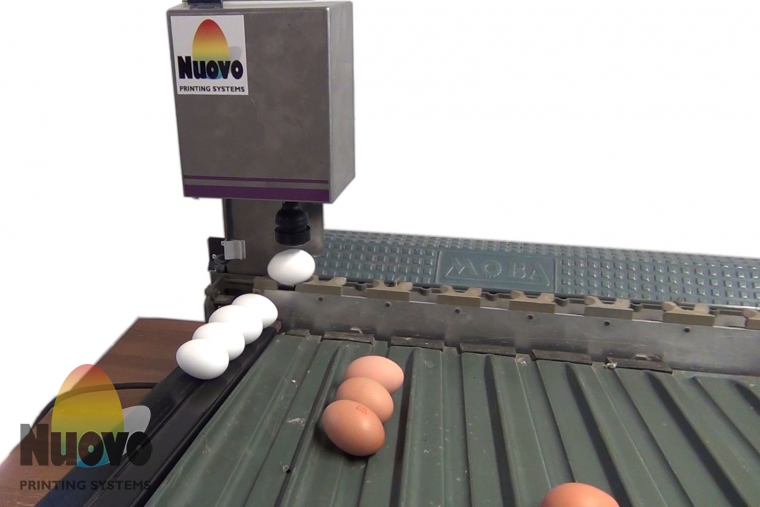 Nuovo Egg Printing and Egg Stamping Systems - Easy Stamp SOR on Grader Infeed Table