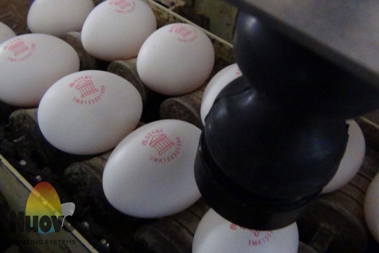 Nuovo Egg Printing and Egg Stamping Systems - Eierstempelgerät Easy Stamp SOR auf Zufuhrtisch der Sortiermaschine