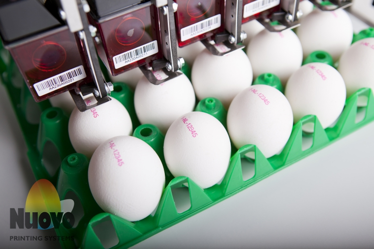 Nuovo Egg Printing and Egg Stamping Systems - Egg Jet Printer BAN1