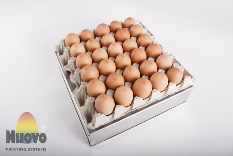 Nuovo Egg Printing and Egg Stamping Systems - Easy Stamp EMS2x3