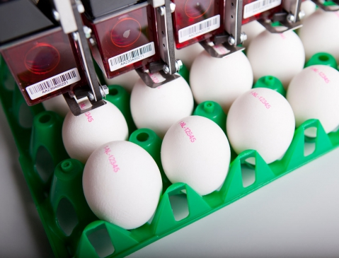 Nuovo Egg Printing and Egg Stamping Systems - BAN5 Shoot 3